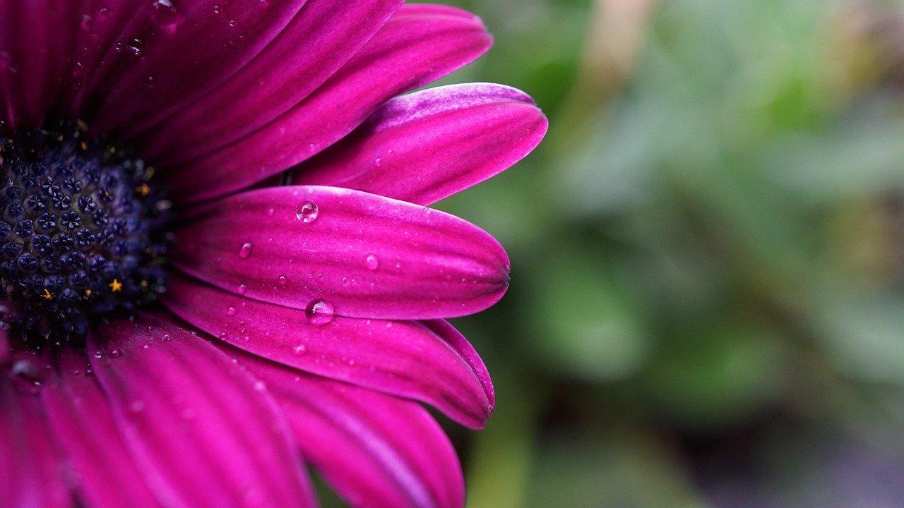 flower, blossom, bloom